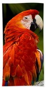 Aloof In Red Beach Towel
