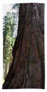 Alta Vista Giant Sequoia Beach Towel