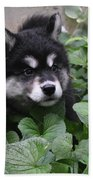 Alusky Pup Peaking Out Of Green Foliage Beach Sheet