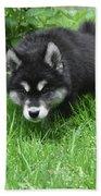 Alusky Puppy Stalking Through Tall Green Grass Beach Sheet