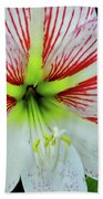 Amaryllis Beauty Beach Towel