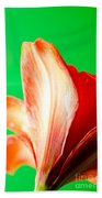 Amaryllis Head Pt Orange Amaryllis Flower On Green Background Beach Towel