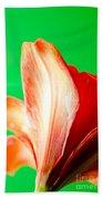 Amaryllis Head Pt Orange Amaryllis Flower On Green Background Beach Sheet