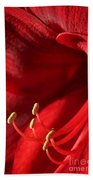 Amaryllis6709 Beach Towel