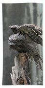 Amazing Frogmouth Bird With His Wings Extended Beach Towel
