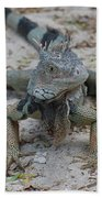 Amazing Iguana With A Striped Tail On A Beach Beach Towel