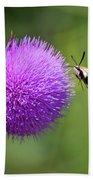 Amazing Insects - Hummingbird Moth Beach Towel