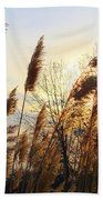 Amber Waves Of Pampas Grass Beach Towel