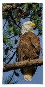 American Bald Eagle 2 Beach Towel