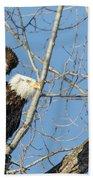 American Bald Eagle 2017-19 Beach Towel