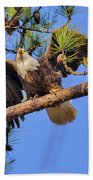 American Bald Eagle 3 Beach Towel