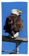American Bald Eagle On Communication Tower Beach Sheet