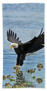 American Bald Eagle Sets Down On Fish Beach Towel