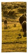 American Bison Sunset March Beach Towel