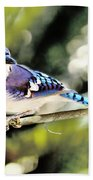 American Blue Jay On Alert Beach Towel
