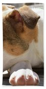 American Breed Puppy Beach Towel