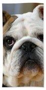 American Bulldog Beach Towel