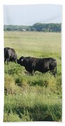 American Cattle Beach Towel