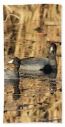 American Coots Beach Sheet