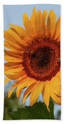 American Giant Sunflower In The Morning Beach Towel