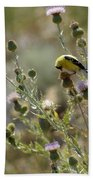 American Goldfinch Having Lunch On Bakery Hill Beach Towel