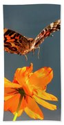 American Lady Butterfly Lands On Cosmos Flower Beach Towel