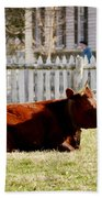 American Milking Devon In Spring Beach Towel