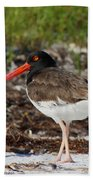 American Oyster Catcher Beach Towel