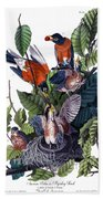 American Robin Audubon Birds Of America 1st Edition 1840 Octavo Plate 142 Beach Towel