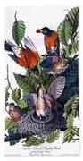 American Robin Audubon Birds Of America 1st Edition 1840 Octavo Plate 142 Beach Sheet