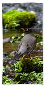 American Robin In Garden Springs Creek Beach Towel