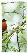 American Robin On Tree Branch Beach Towel