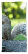 American Squirrel Beach Towel