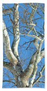 American Sycamore - Platanus Occidentalis Beach Towel