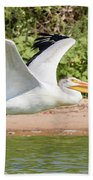 American White Pelican Above The Water Beach Towel
