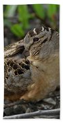 American Woodcock At Rest Beach Towel