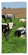 Amish Farm With Spotted Cows And Cattle In A Field Beach Towel