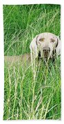 Among The Grasses Beach Towel