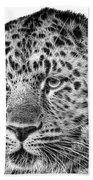 Amur Leopard Beach Sheet