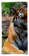Amur Tiger 3 Beach Towel