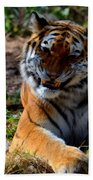 Amur Tiger 4 Beach Sheet