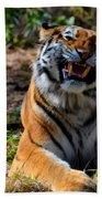 Amur Tiger 7 Beach Towel