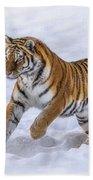 Amur Tiger Running In Snow Beach Towel by Rikk Flohr
