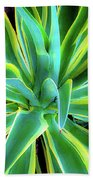 An Agave In Color  Beach Towel