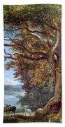 An Ancient Beech Tree Beach Towel