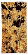 Anchorage Winter Birch Trees Beach Towel