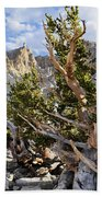 Ancient Bristlecone Pine Great Basin Beach Towel by Kyle Hanson