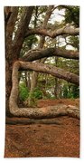 Ancient Forest Beach Towel