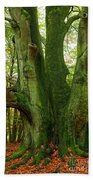 Ancient German Oak Trees In Sababurg Beach Towel