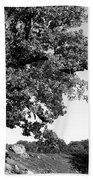 Ancient Oak, Bradgate Park Beach Towel